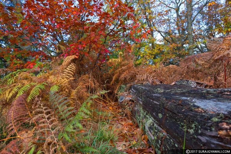 Autumn_Trunk