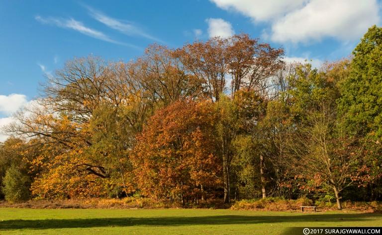 AutumnTrees